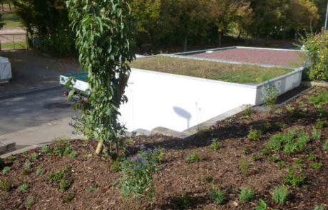 Bepflanzter Vorgarten An Treppenaufgang In Hanglage