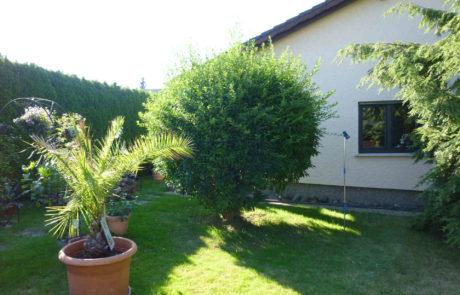 Garten Vorher 2