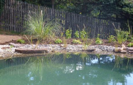 Neu Bepflanzung Des Schwimmteichs