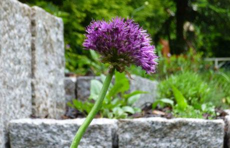 Neue Gartengestaltung Mit Hochbeet Und Rasensanierung