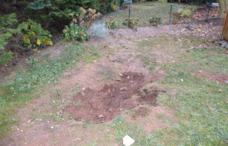 Rasen Vorher 2