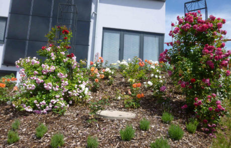 Rosenbeet Als Terrasseneinfassung