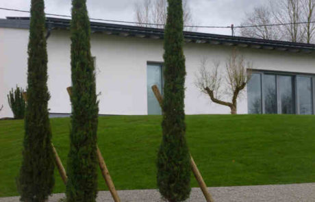 Vorgartengestaltung Mittelmeerzypressen Und Gambionen