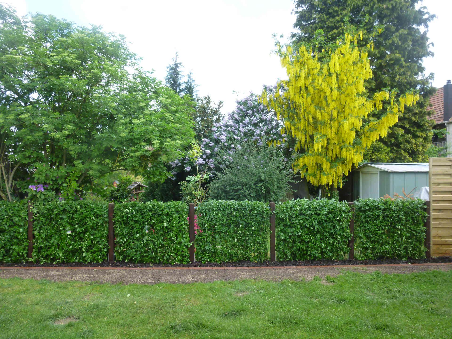 Zaun Und Hecke Als Gruene Gartenbegrenzung
